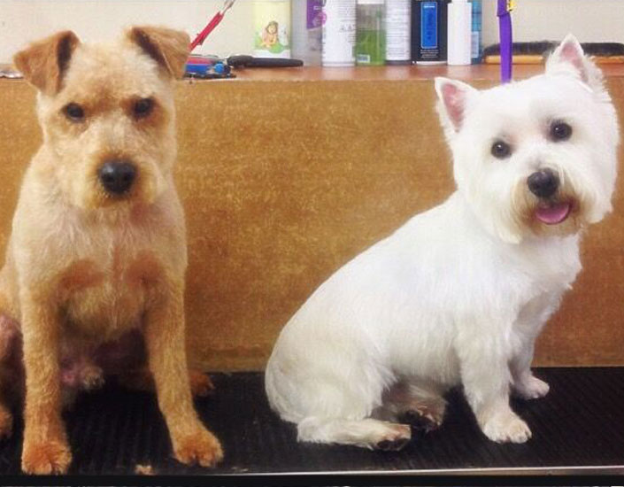 dog grooming handforth, manchester